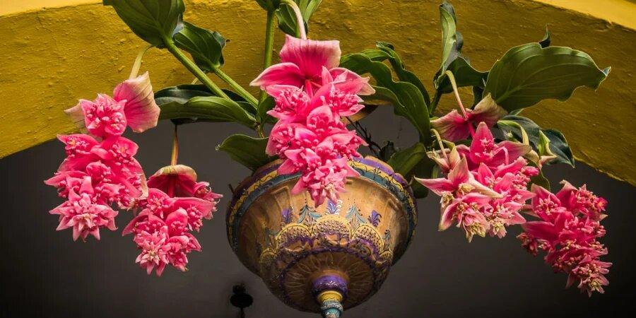 flores de un patio andaluz